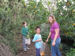 "Picking oranges with ""the kids"""