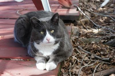A copy cat of Harra