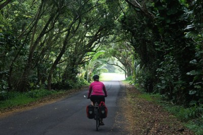 Cycling through a tunnel of trees