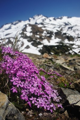 A burst of colour in the alpine