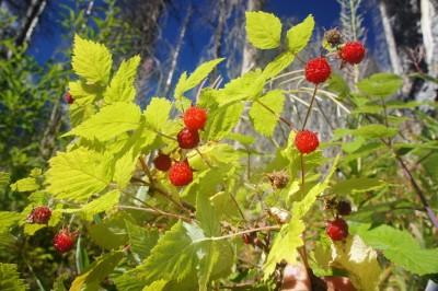 Hmmm raspberries....